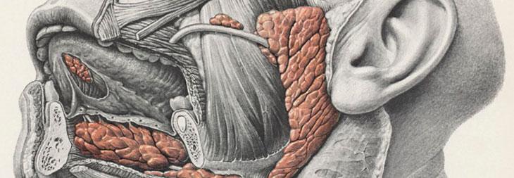 Диагностическая сиалоэндоскопия