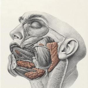 Вопросы по заболеванию слюнных желез